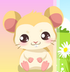 Hamsteri De Ingrijit